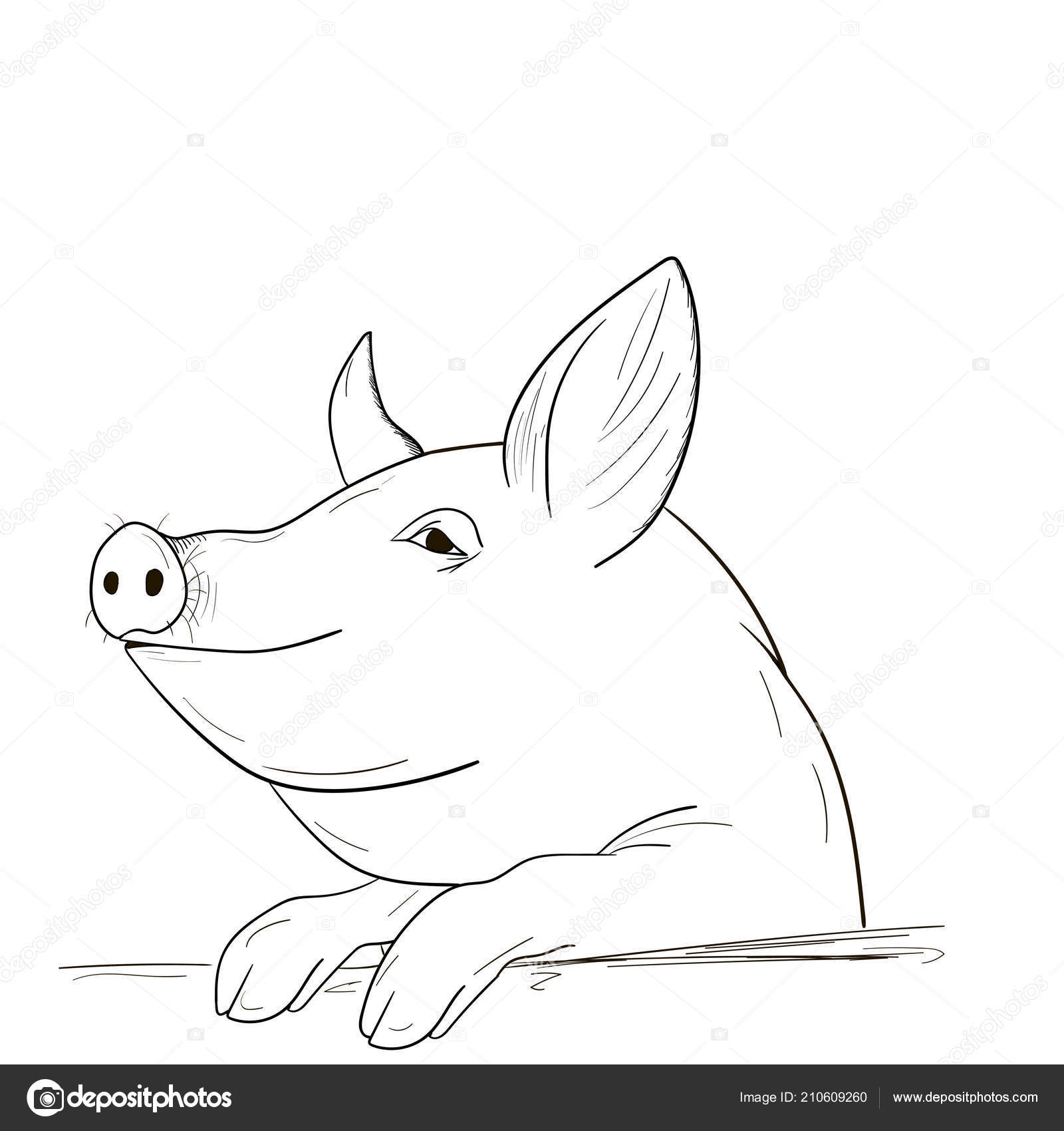 Chinese New Year Pig A Pig Sketch