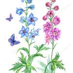 Delphinium Painting Delphinium Blue Pink Watercolor Painting White Background Isolated Clipping Path Stock Photo C Po Lelya Bk Ru 208855798