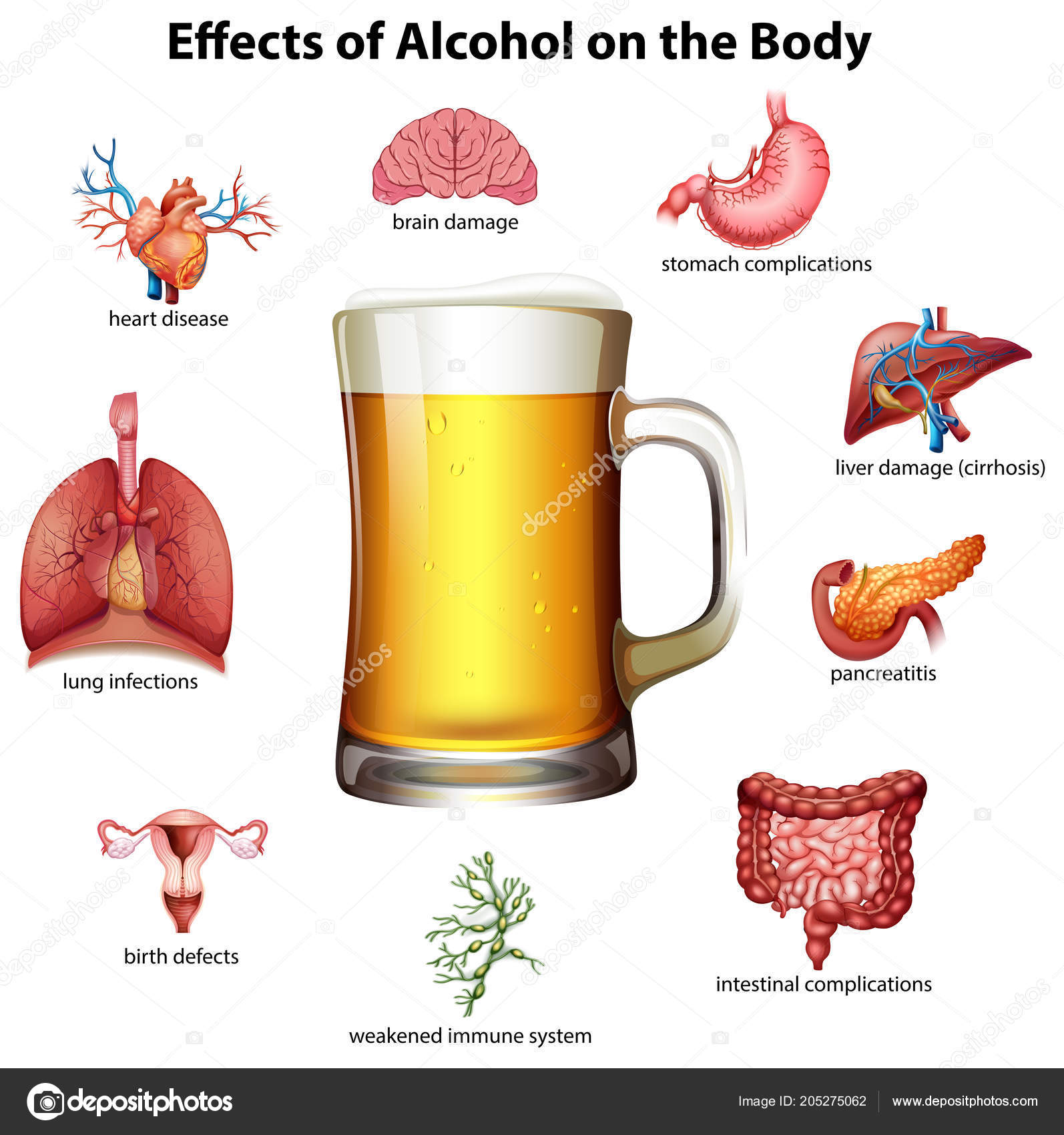 Effects Alcohol Body Illustration