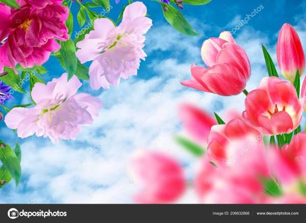 Яркие Красочные Цветы Тюльпаны Фоне Весеннего Пейзажа ...