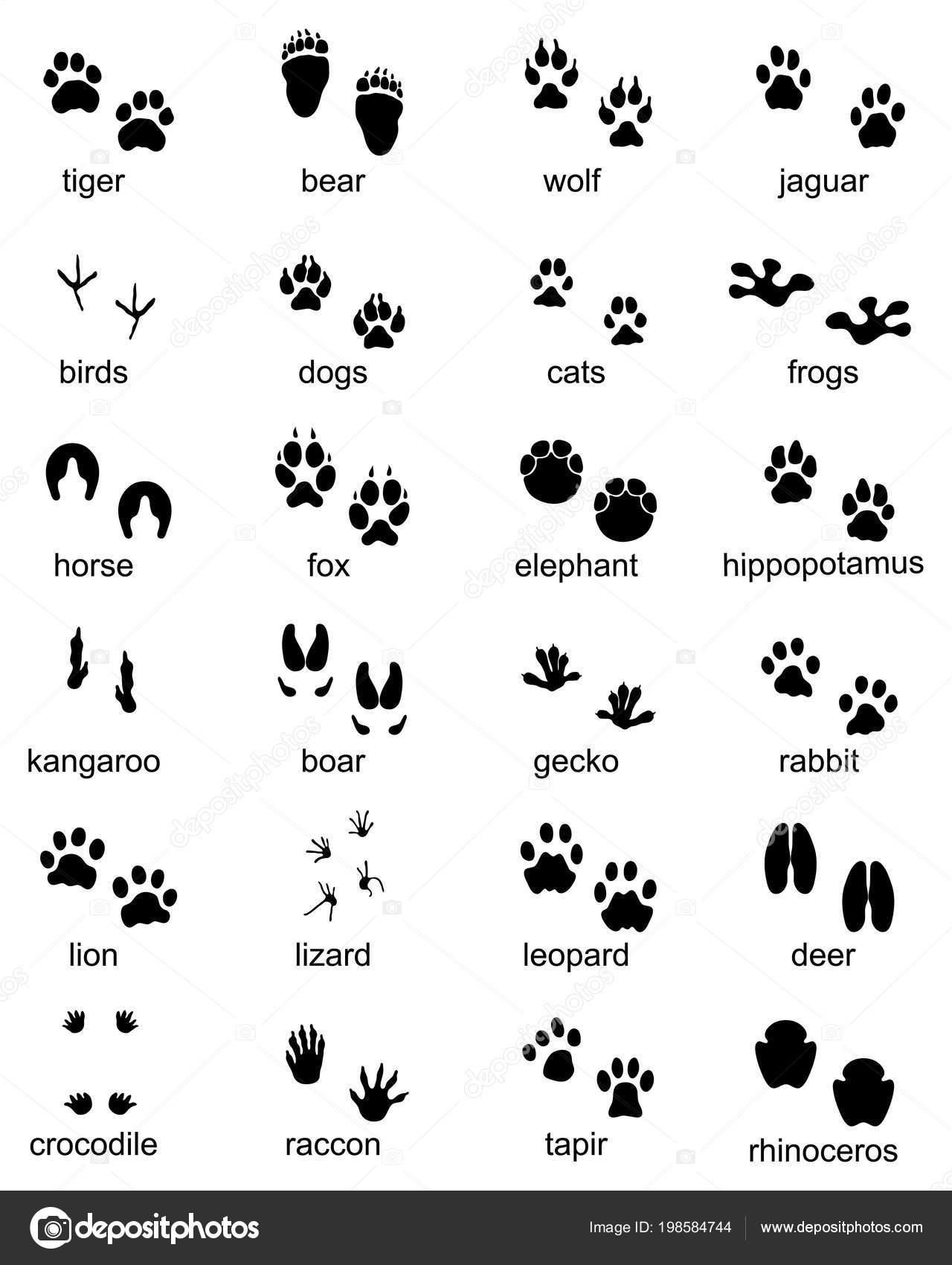 Set Impronte Animali Selvatici Illustrazione Della