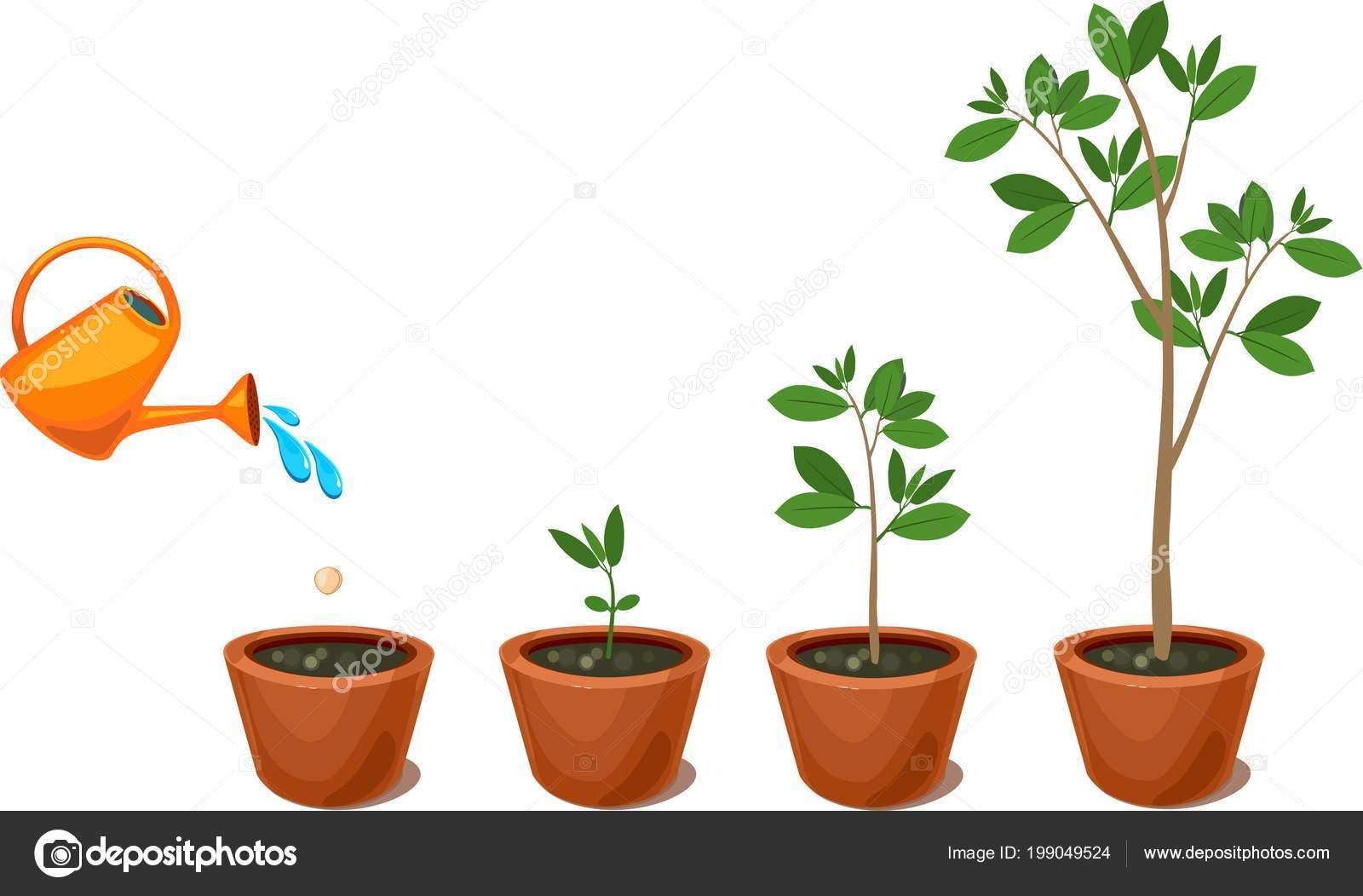 Stages Growth Tree Seed Watering Plants Pot