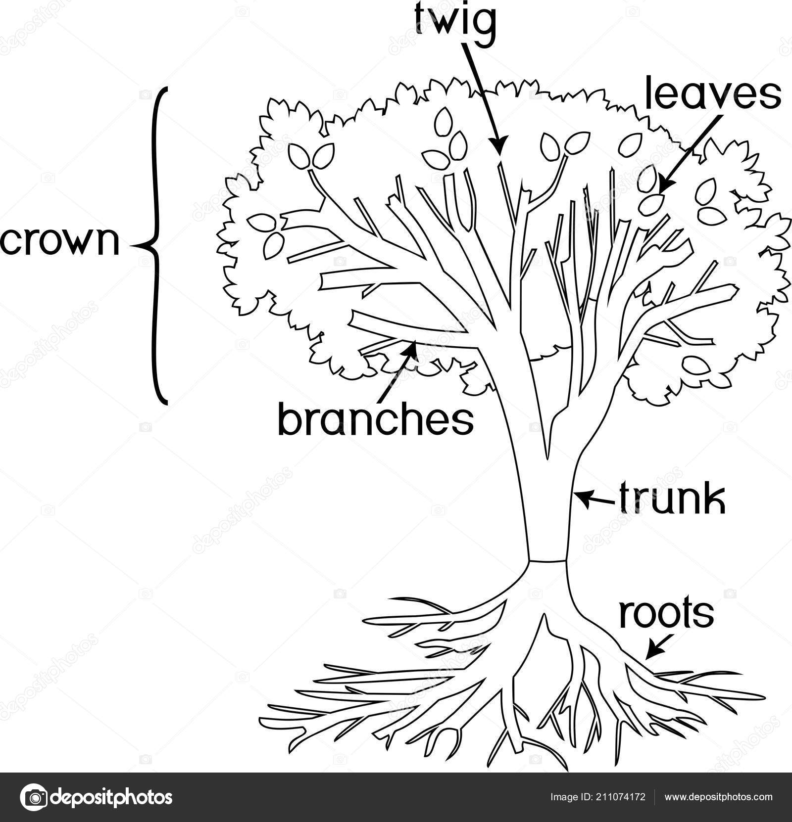 Tree With Roots Coloring Page