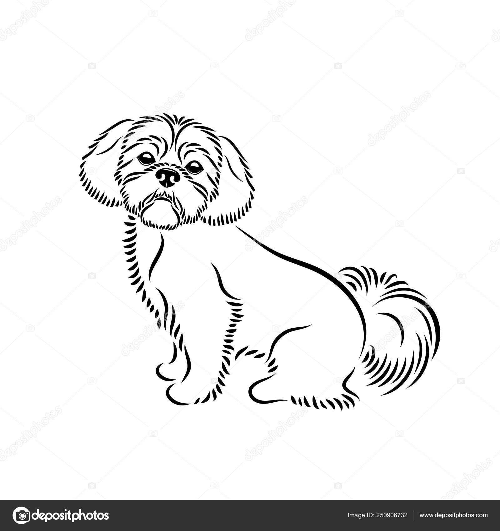 Illustration Adorable Shih Tzu Dog