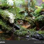 Aquascape Terrarium Design Small Glass Aquarium Displayed Public Stock Photo Image By C Aisyaqilumar 231031732
