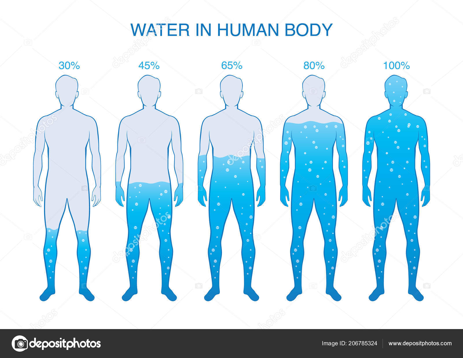 Difference Percentage Water Human Body Illustration