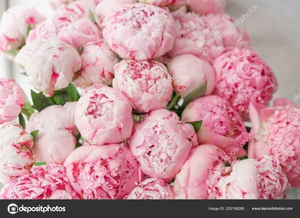 Обои для рабочего стола. Прекрасные цветы Розовые пионы ...