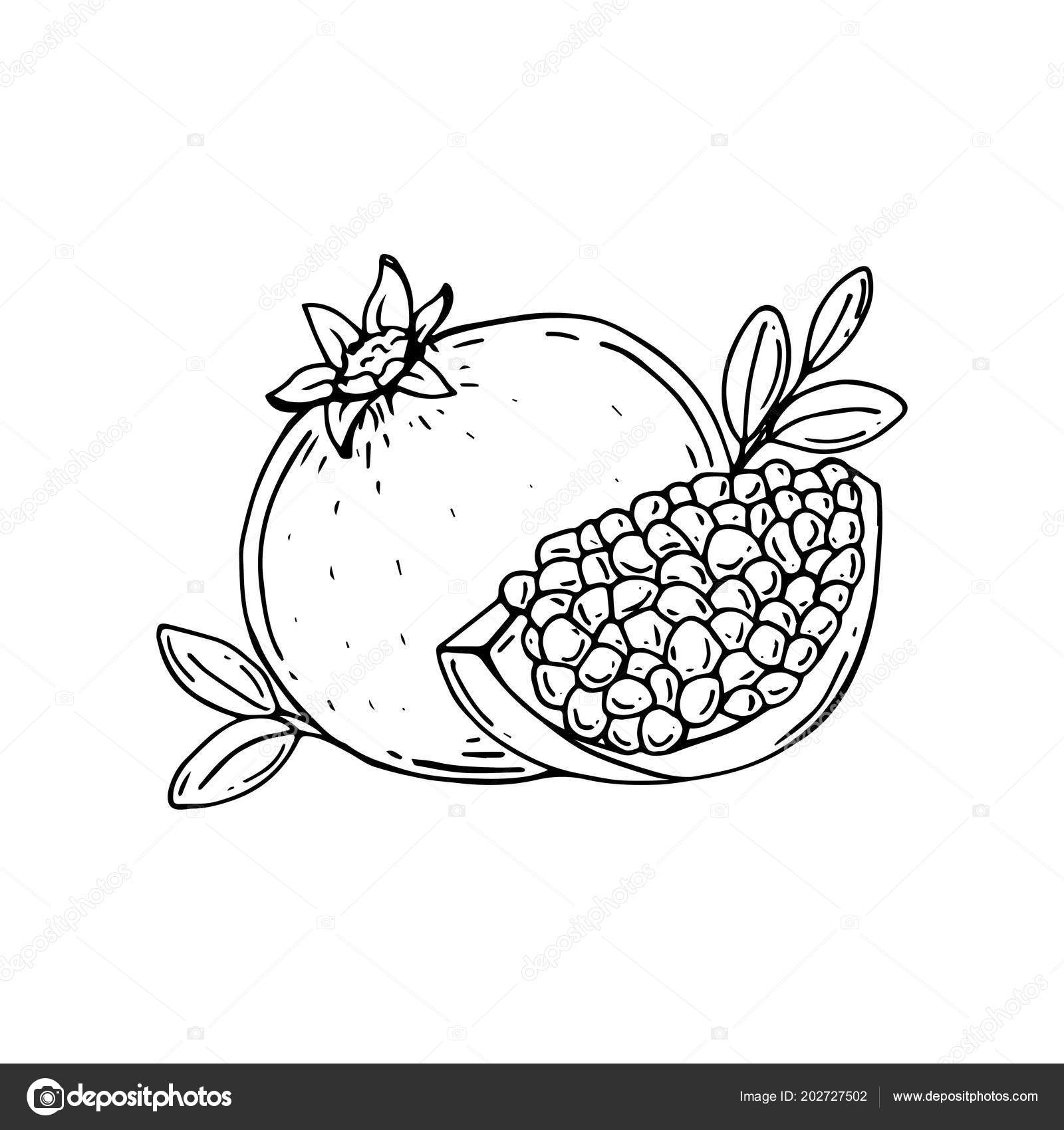 Comer Junior School 35 Trends For Pomegranate Drawing Pic