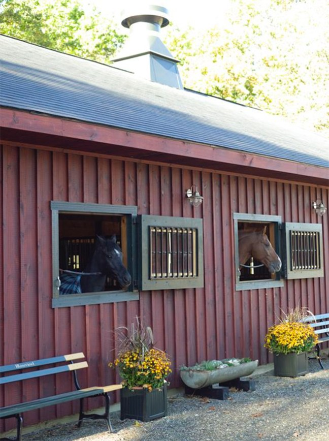 Horses looking outside their stalls