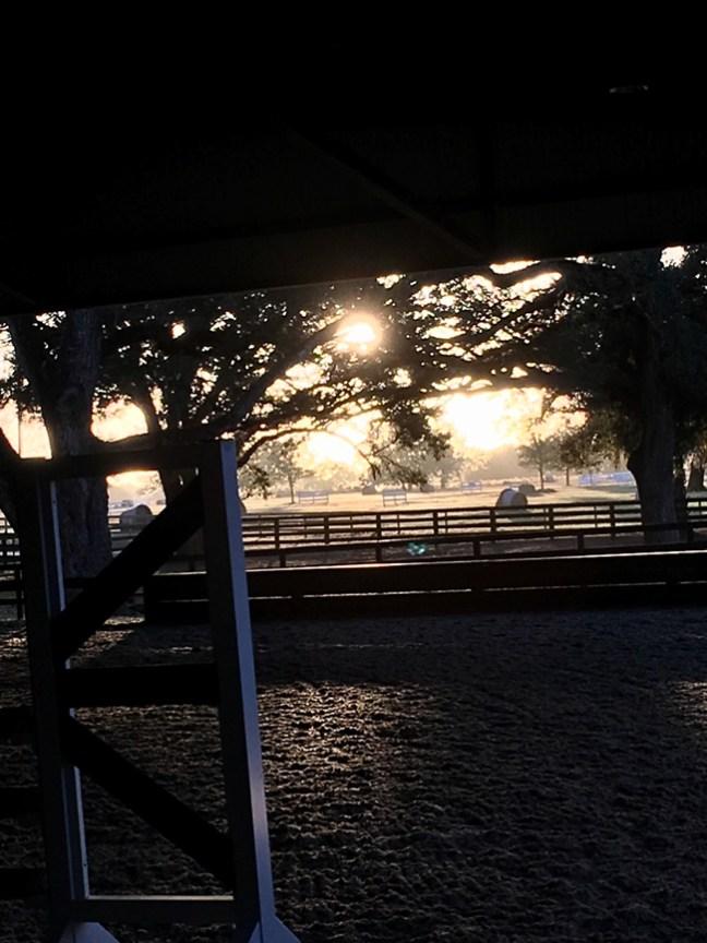 golden hour at Winding Oaks