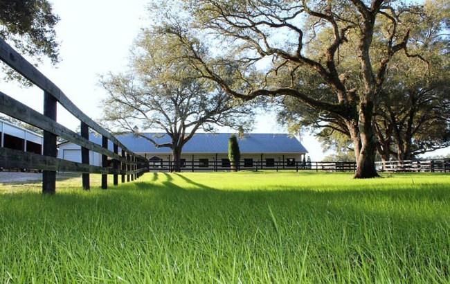 lush green pastures