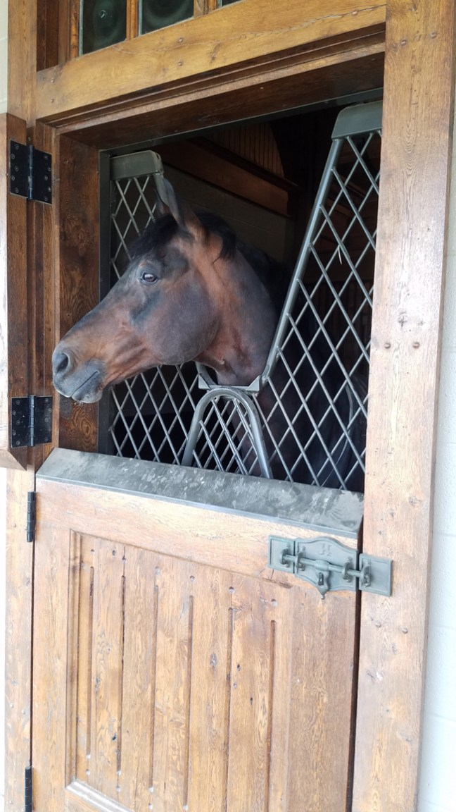 horse in its stall