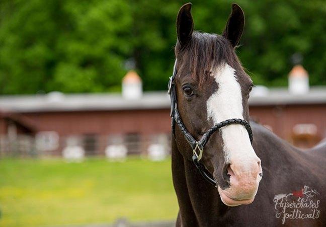 Dexter, Lindsay's horse