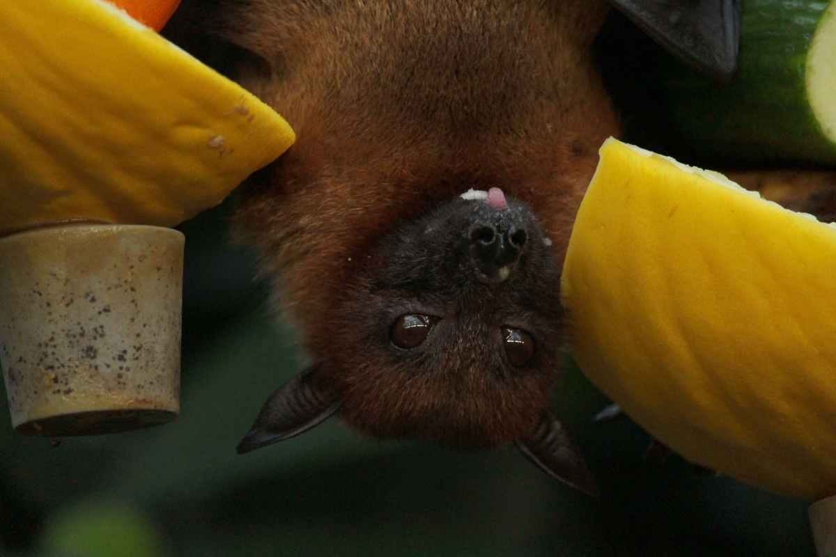 Writing in the Dark, and What it's Like to Be a Bat