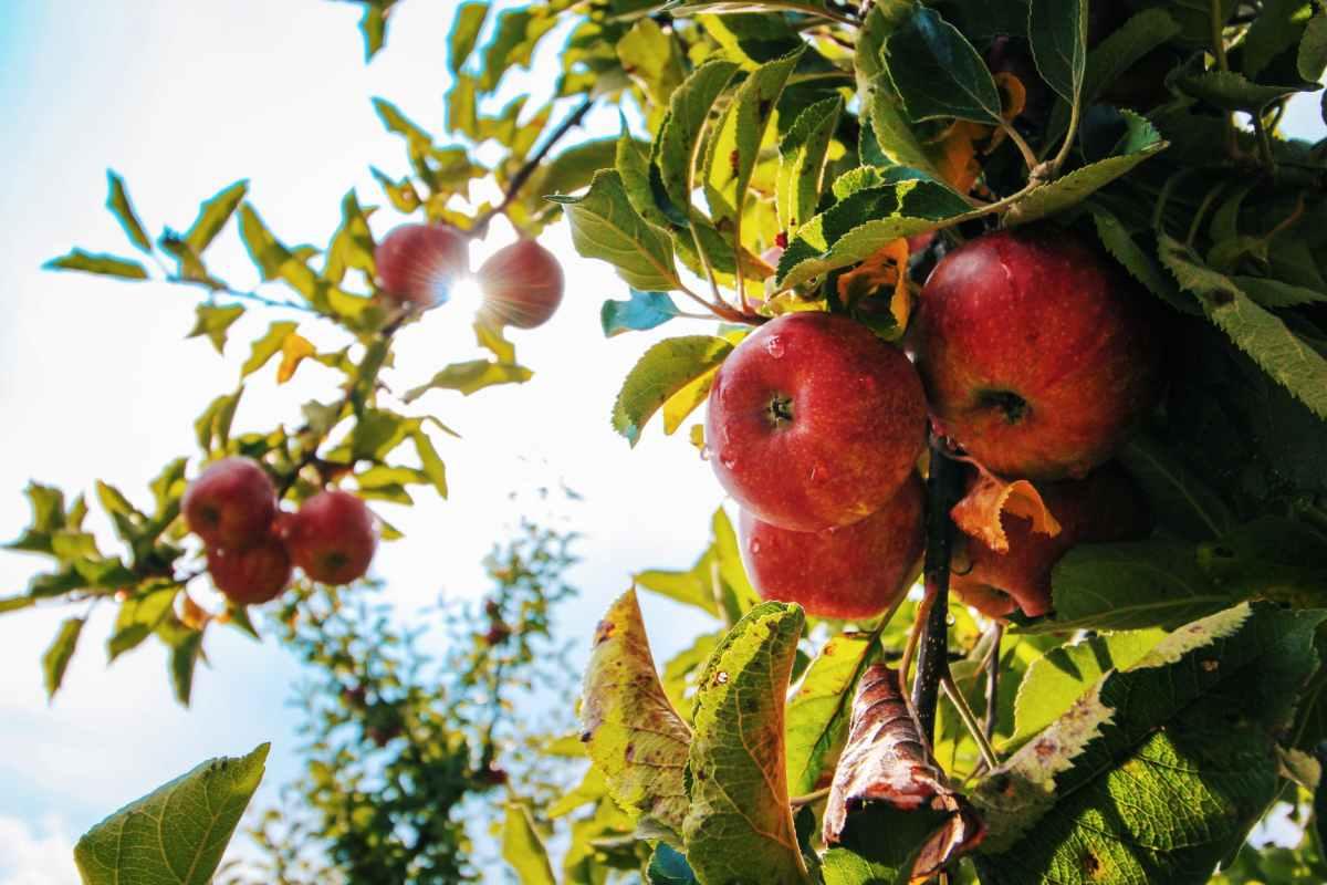 Faith and Apple Seeds