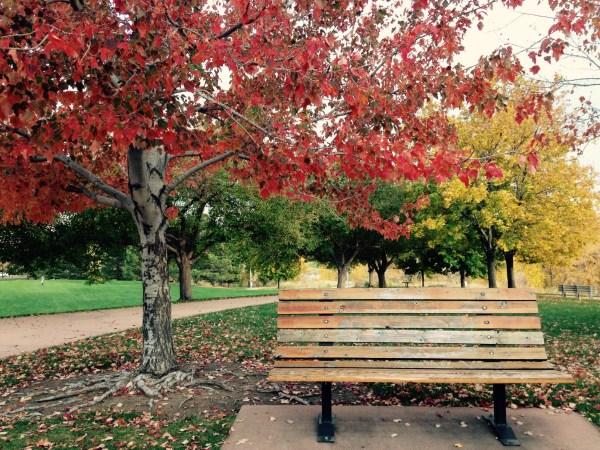beautiful garden benches Photo Friday! Park bench, Autumn colors | staceyaltamirano