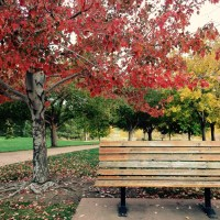 Photo Friday! Park bench, Autumn colors