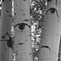 Photo Friday: The Trees are Watching