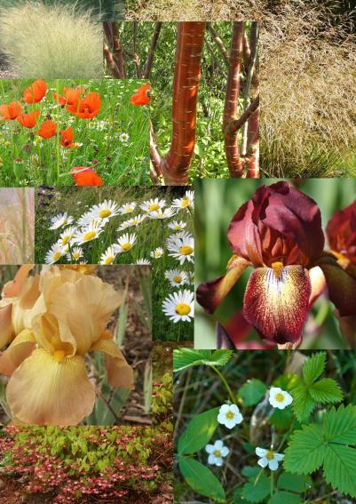 REReDesign Plants