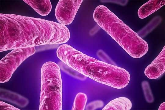 tb_bacteria