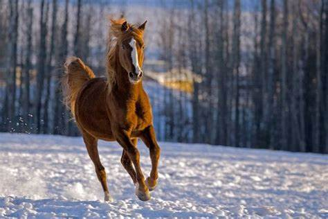 2020 National Horse Protection Day