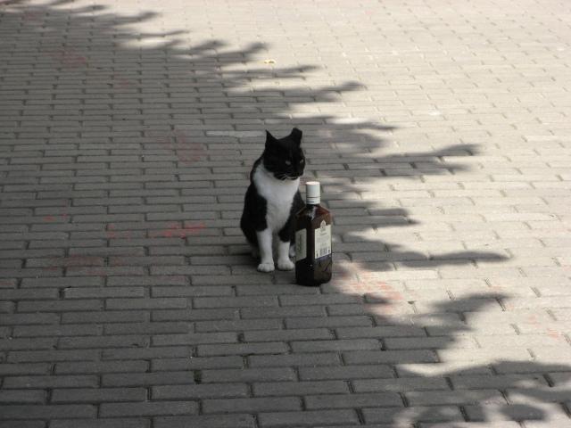 Satekles ielas kaķis