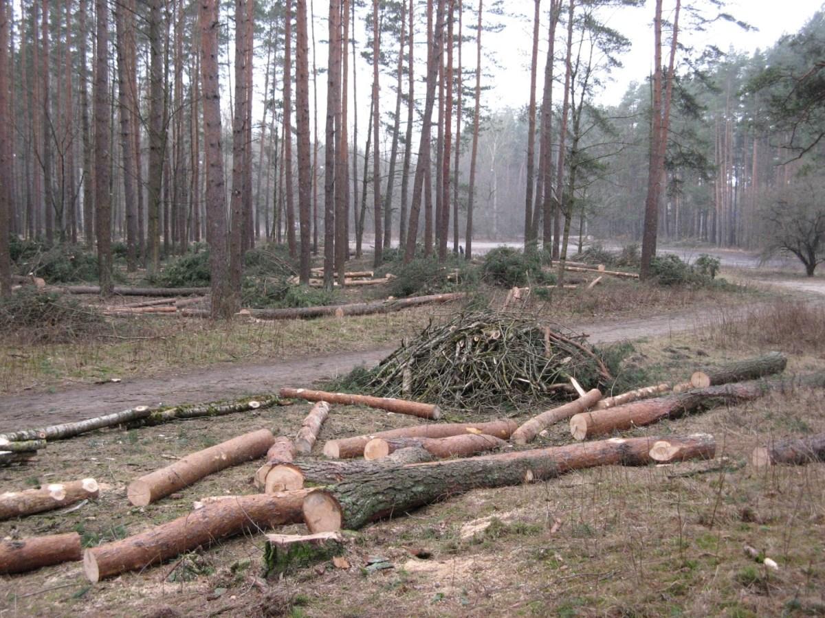 Biķernieku mežs