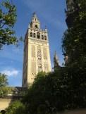 La Giralda - wieża katedry