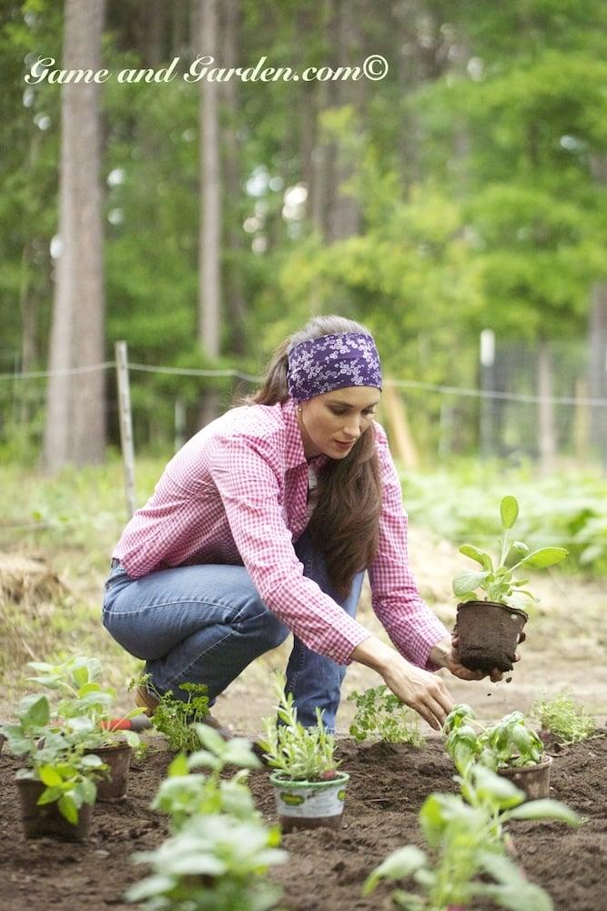 """Planting Bonnie Plants in """"Buff"""""""