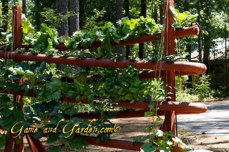 "Using a Hydroponics system such as this allows me to grow plants in the ""off season"" and aids in keeping pests at bay."