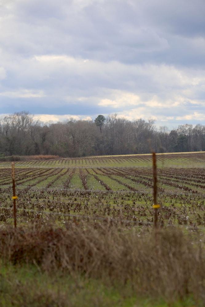 Fields in Orville, Alabama - if fields could talk...