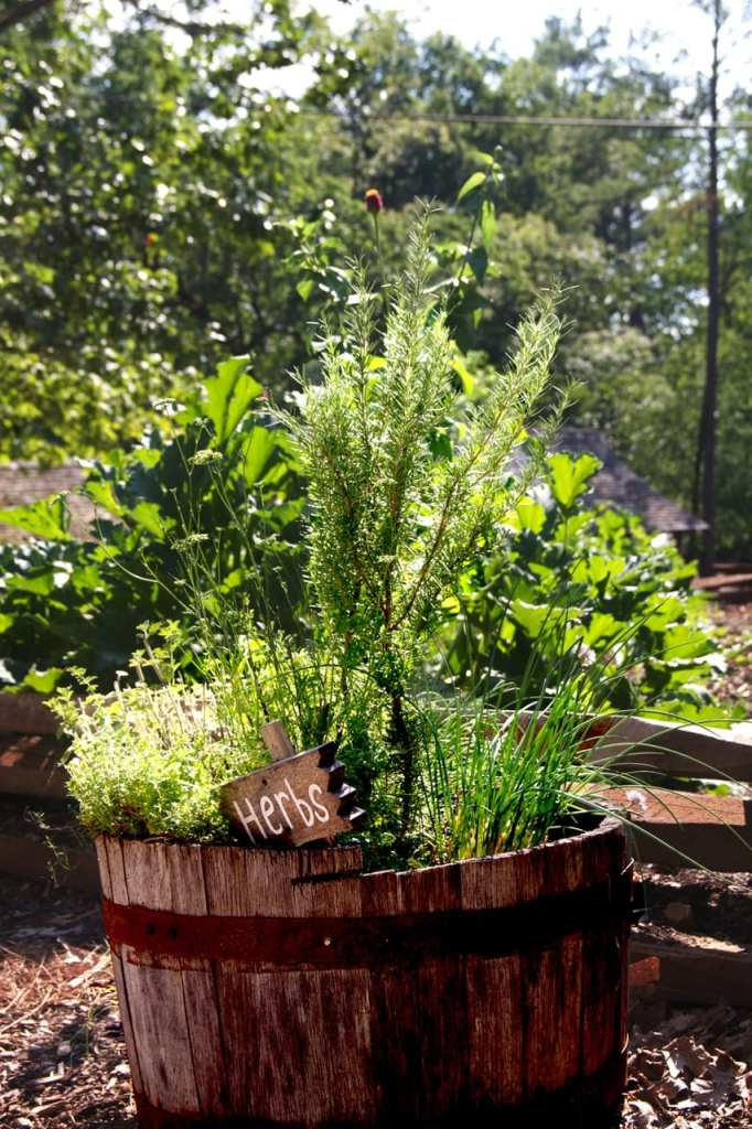 If you are new to gardening, planting herbs are the perfect place to start.