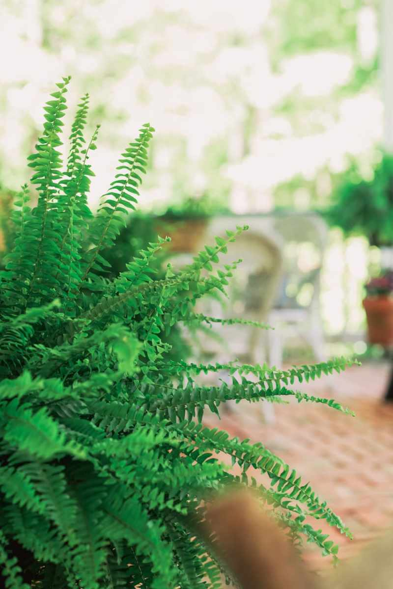 close up of fern on front porch