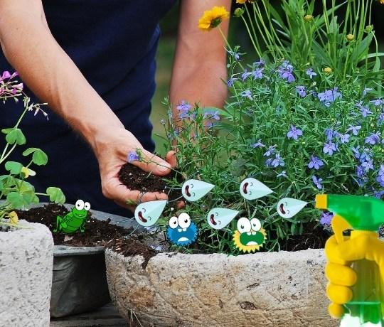 Trädgårdsskötsel för att bekämpa ohyra