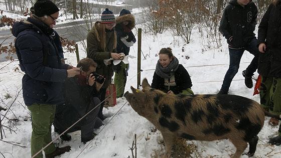 Hjärtat förklarar hur det fungerar i grisskogen.