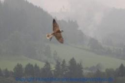Flugshow-Burg-Hohenwerfen-004