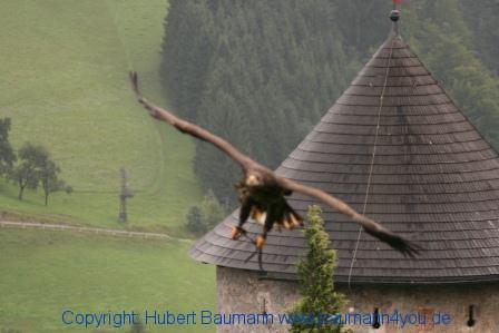 Flugshow-Burg-Hohenwerfen-007