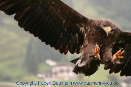 Flugshow-Burg-Hohenwerfen-009