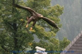 Flugshow-Burg-Hohenwerfen-014