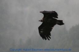 Flugshow-Burg-Hohenwerfen-017