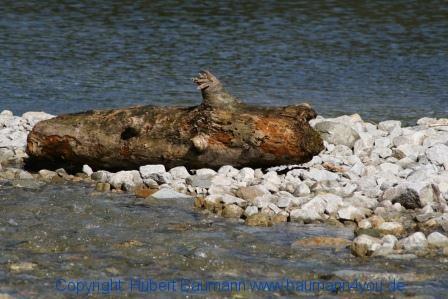 Grossarltal 480 Ötzlsee - irgendwie wie ein gestrandeter Wal