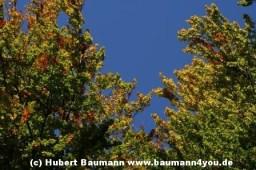 Spessart in Herbst 010