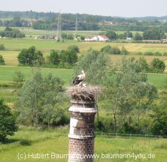 Storchennest Gunzenhausen