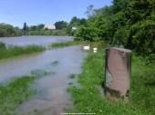 Aschaffenburg Hochwasser 2. Juni 2013 - 4