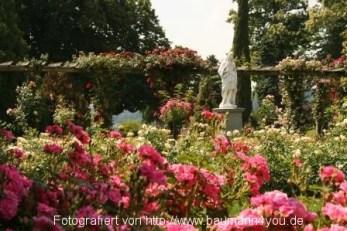 Insel Mainau - Rosengarten