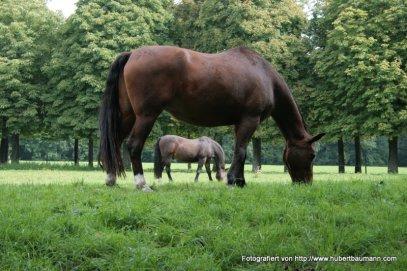 Pferde am Schloss-Solitude