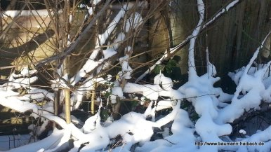 Winterspaziergang in Hessenthal