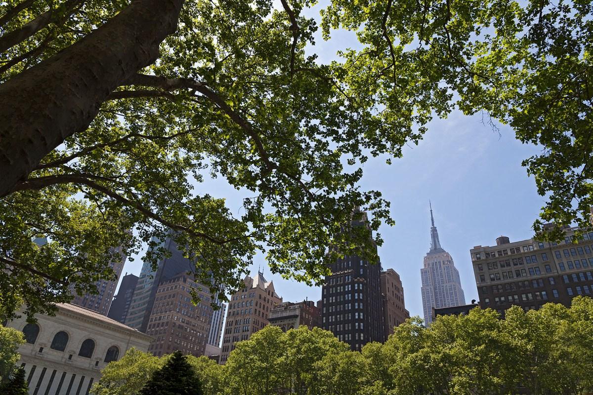 Blick durch eine Baumkrone auf die Architektur am Bryant Park, Manhattan auf der Seite Stadterkundung.com