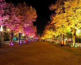 festival-of-lights-2007-13