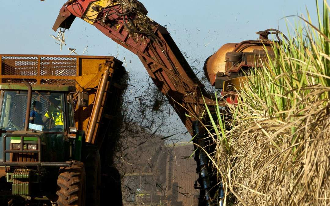 Social dialogue in the beet and sugar sector